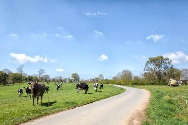 Photo #143 – Sur les routes de campagne