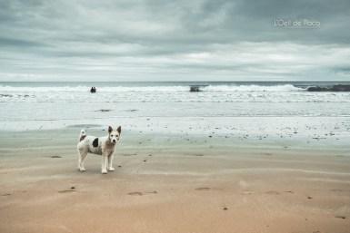 Photo #240 – Nom d'un chien