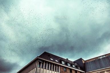 Photo #282 – Et les nuages piafaient