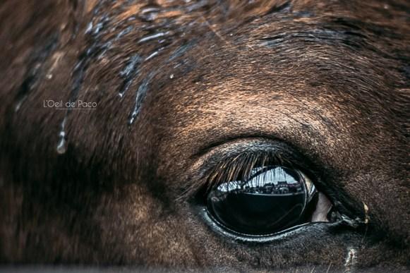 L'Oeil de Paco - Foire aux Poulains - Plaintel - 2015 (61)