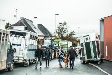 L'Oeil de Paco - Foire aux Poulains - Plaintel - 2015 (68)