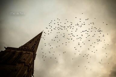 Photo #353 - Les ois(hauts)