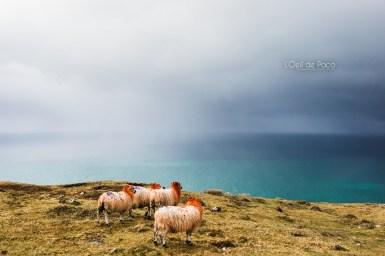 L'Oeil de Paco - Peninsule de Dingle - Irlande (167)