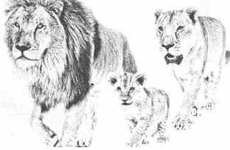 Laufen im Löwenrudel