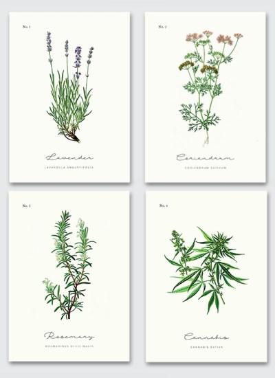 Zestaw 4 plakatów z ziołami do kuchni