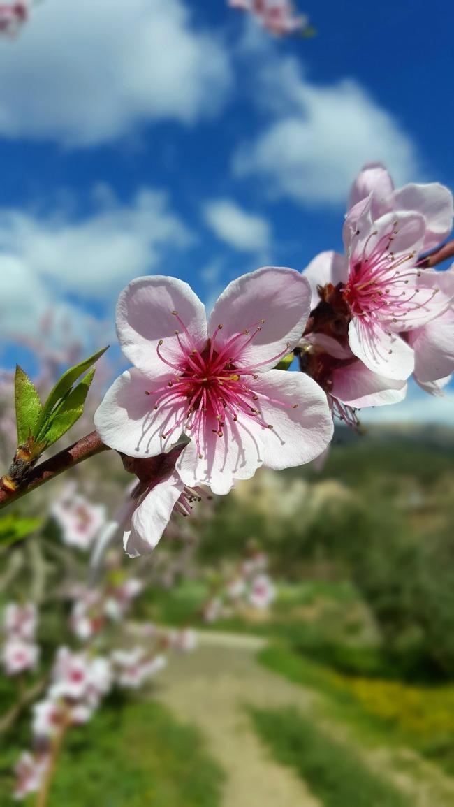 Inspiración primaveral: Las Pascuas ya están aqui.