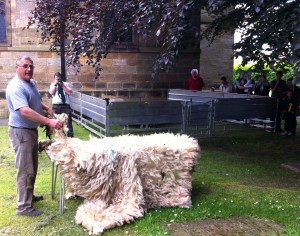 Sheep2014C