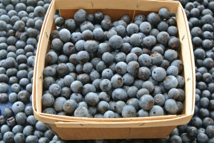 blueberries fresh off the bush and ready to eat