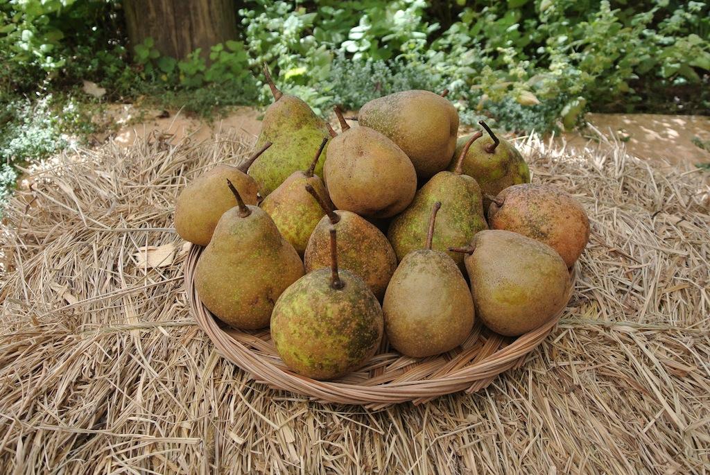 heritage-pears
