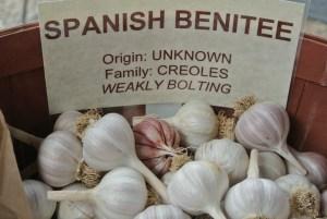 spanish-benitee-copy