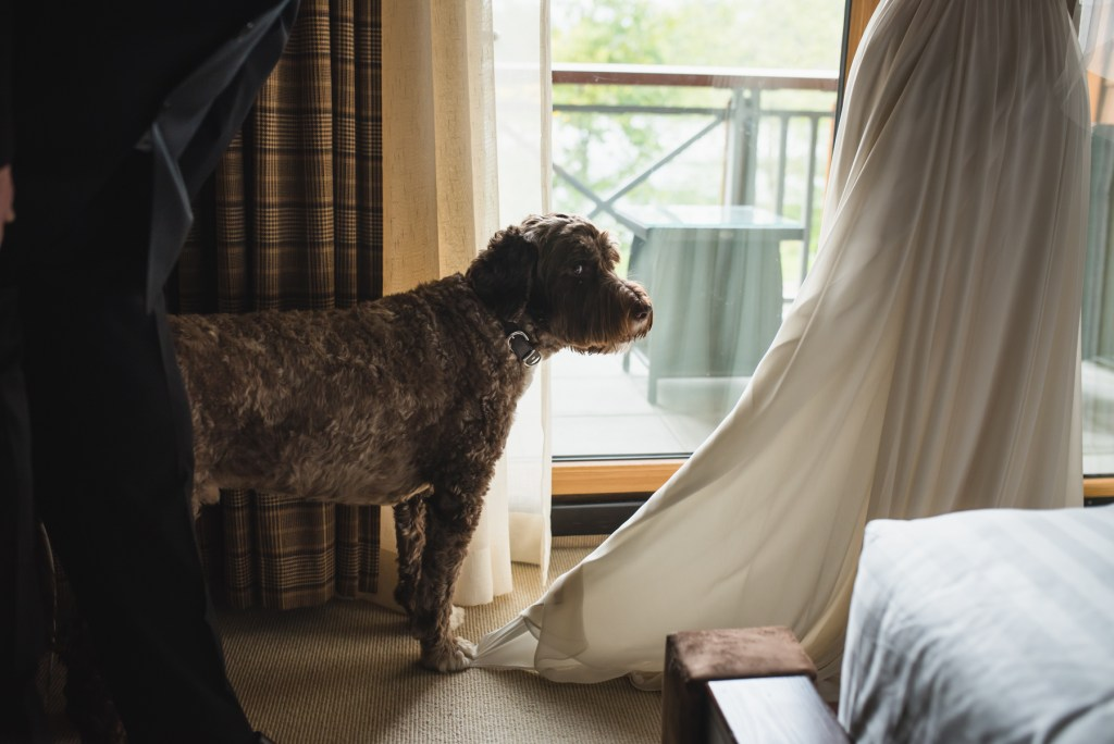 whistler-wedding-photography-dog-dress_LS