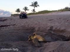 CM dawn turtle 1