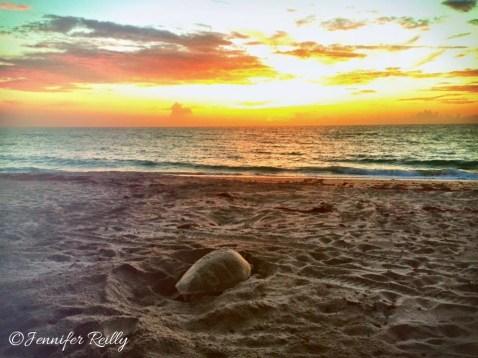 CM dawn turtle with sunrise (1)