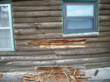 Rotten logs