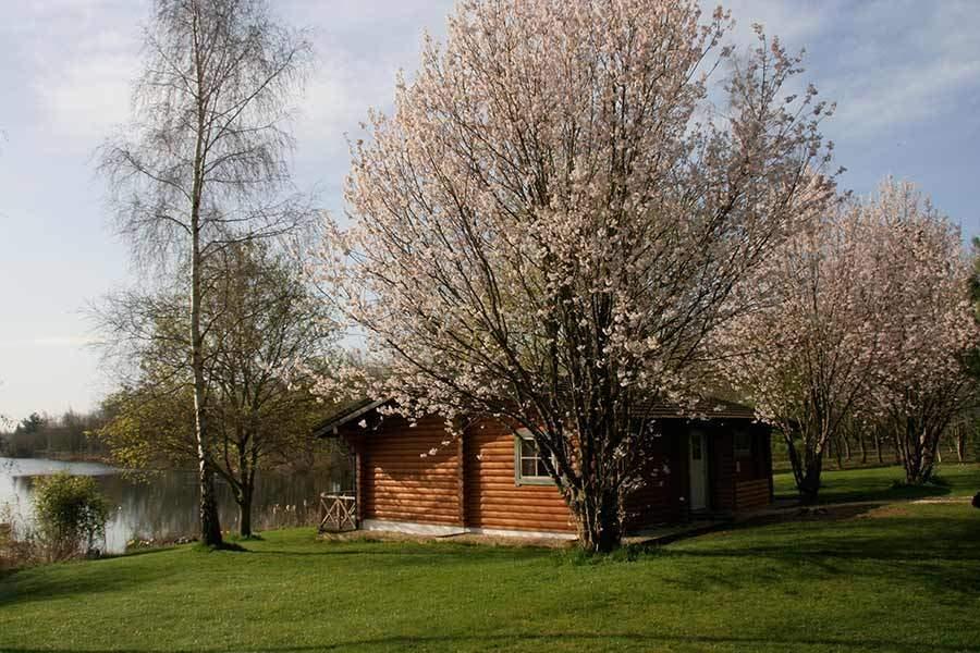 Lake Springs House 5