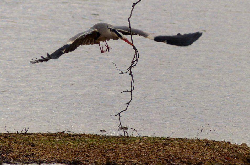 Birdwatching Holidays UK