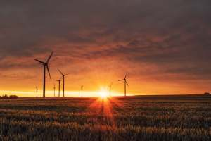 Windmills in a Field during Sunset