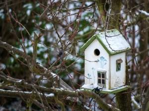 bird feeder, house, feed