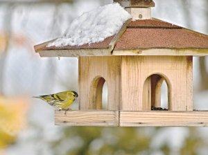 house bird, nest, nest box