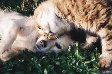 Pet Insurance | logintips.net