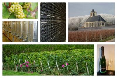 Visite de l'exploitation viticole : Champagne Vandier à Bethon, à proximité du Logis de Villegruis. Vignoble, cuverie, église de Bethon et ses vignes