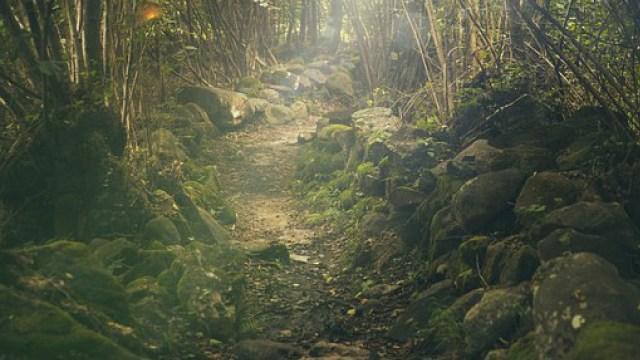 Nature vs Nurture – Which is the Winner?