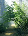 Feng Shui Forest Images for Wealth