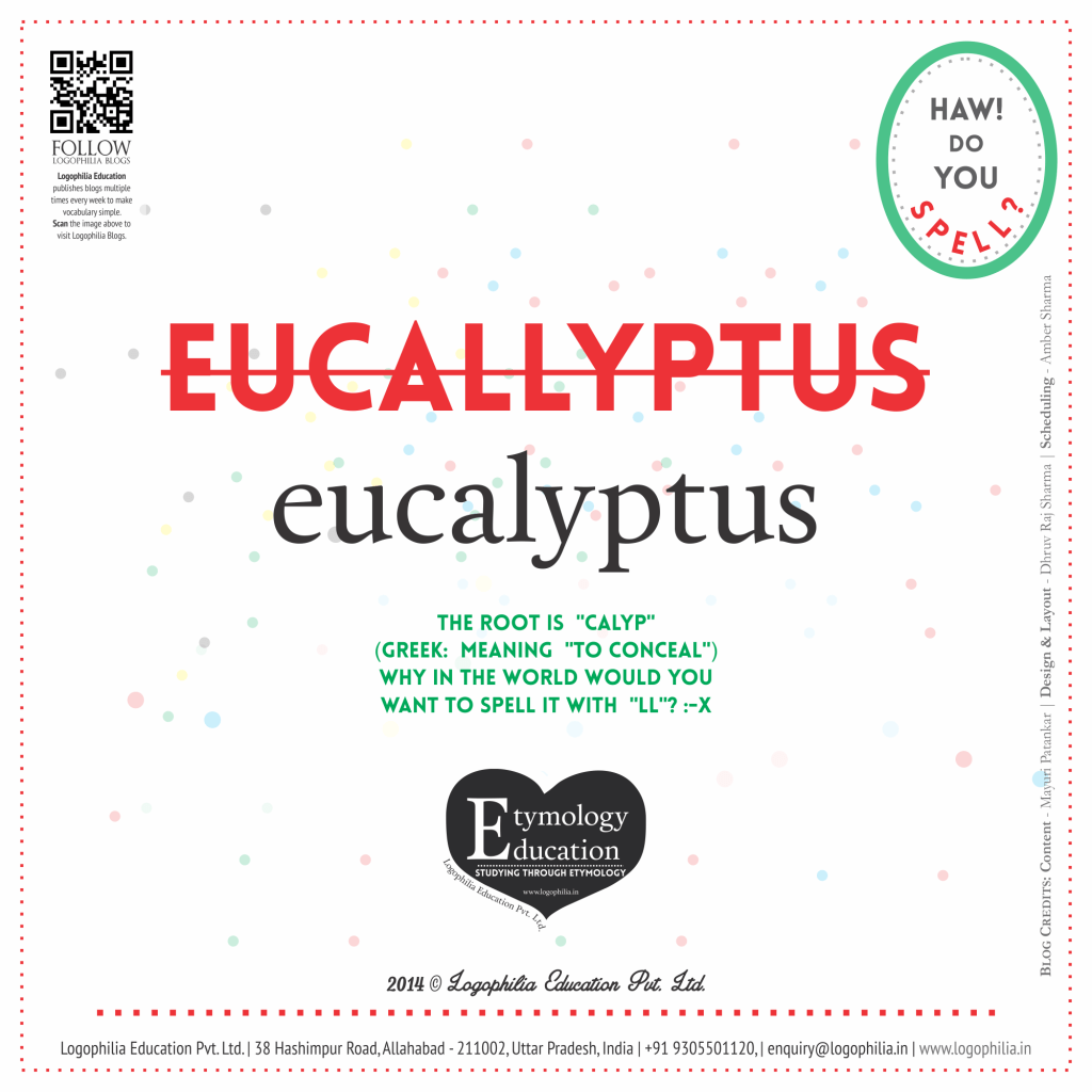 eucalyptus(5)