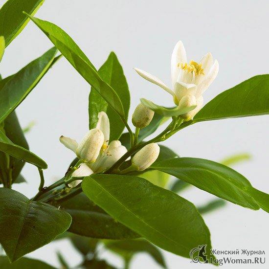 plantele tradiționale își pierd greutatea