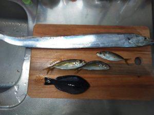 前回カゴ釣りの釣果※タチウオはルアーでHIT