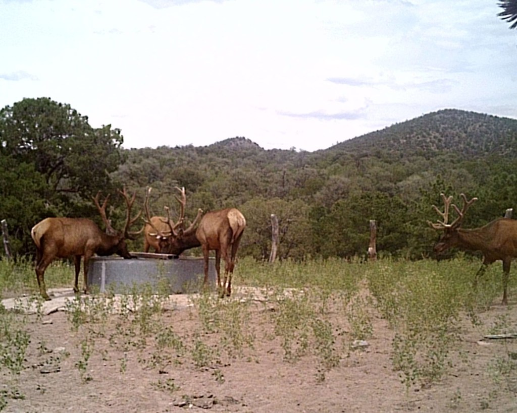 Elks Group