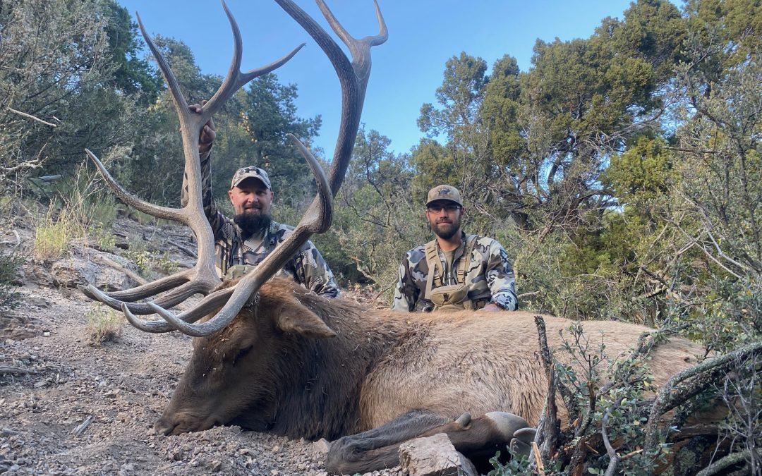 Update From our October Elk Hunts in New Mexico