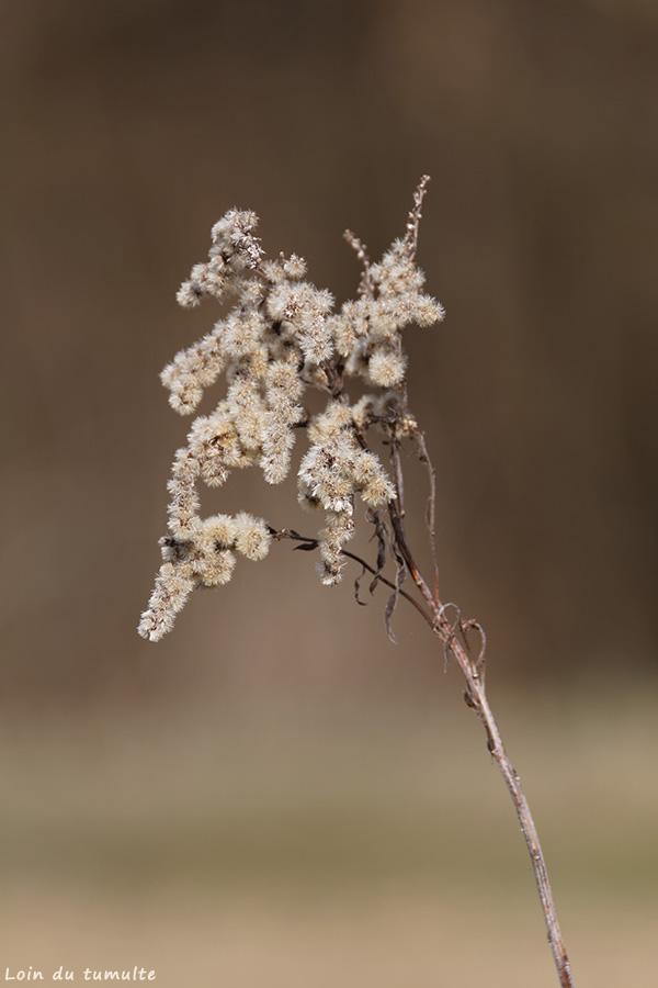 Plante séchées au bord du lac des vernays à Taninges