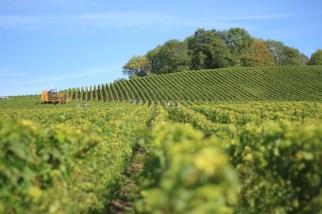 Terraces of Vines