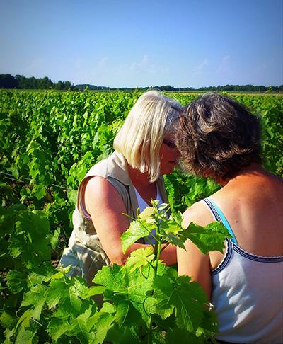 Le vin de Touraine est-il moins bon que celui de Bordeaux ?
