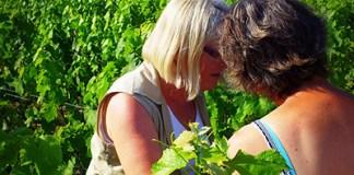 vin de touraine vigneron