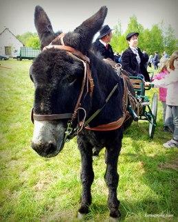 foires aux ânes Poulaines Indre Berry avec LoireXplorer concours d'attelage
