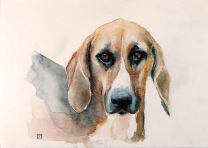 Chien courant Grand Anglo-Français Sologne Cheverny copyright Yseult Carré