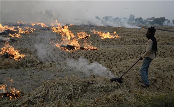NGOs educate farmers against stubble burning