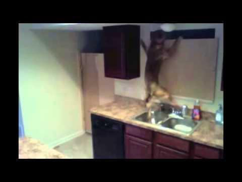 Câmara escondida para descobrir como o cão saía de casa