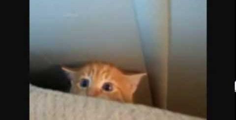 Compilação de gatos, demais