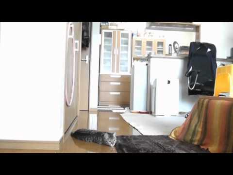 O gato guarda-redes