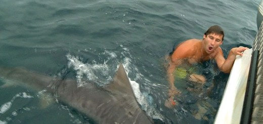Tubarão quase leva perna de um maluco