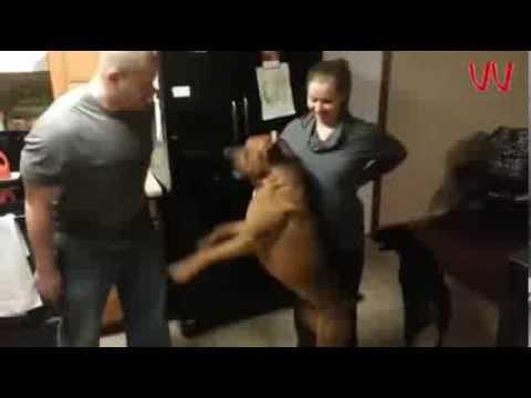 Cão protege barriga de grávida