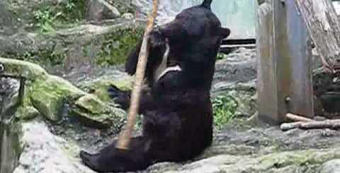 O Urso Kung Fu