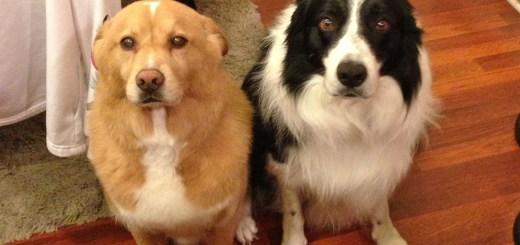 Os cachorros mais culpados de sempre