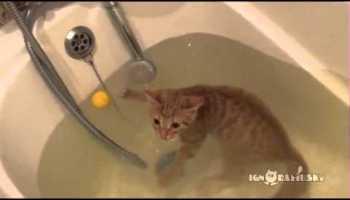 Os gatos também sabem nadar