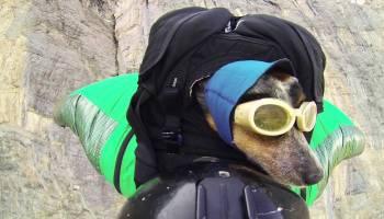 Vejam o que fizeram a este cão, ele adorou