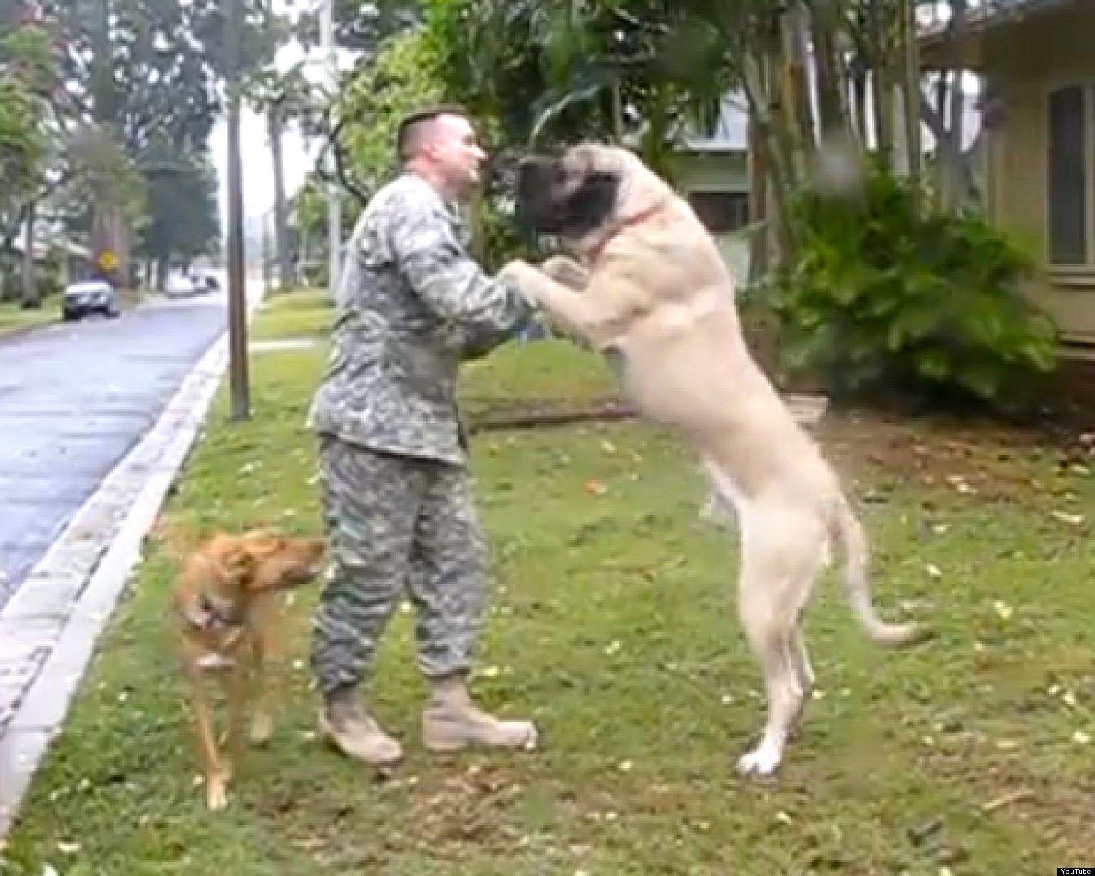 Soldados regressam a casa e são recebidos em êxtase pelos seus cães
