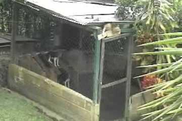 Cão escapa da sua prisão de forma espectacular